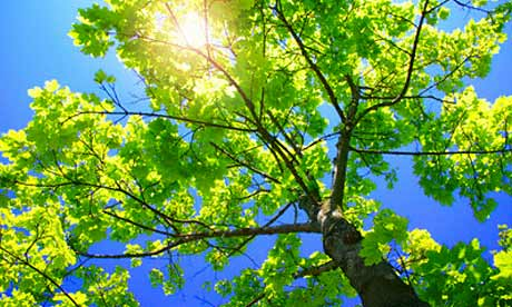 Tree in sunlight